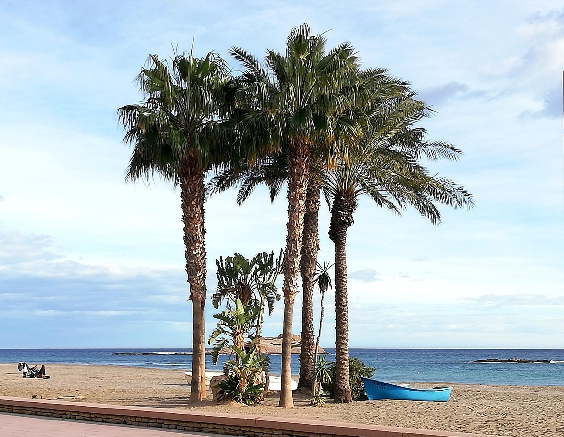 Palmeras Playa de Carboneras